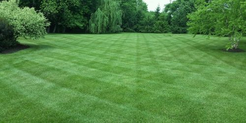 Lawn Care Program, Lawn Fertilization, Weed Control, Aeration