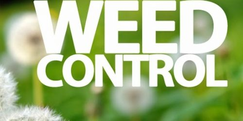Weed Control, Lawn Maintenance, Lawn Care, Weed free lawn